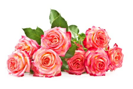 Beautiful bouquet of roses on a white background. photo