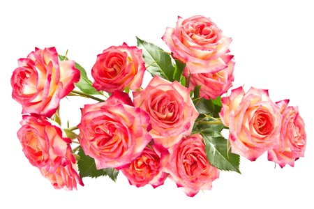 anniversary flower: Beautiful bouquet of colored roses, in isolation, the view from the top  Stock Photo