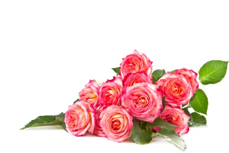 rose coloured: Bouquet of beautiful color of roses on a white background