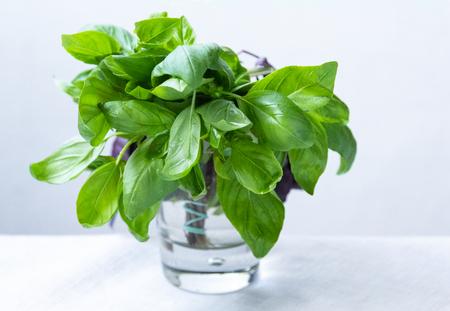 Fresh Green Basil in a Glass. Basil Leaves, Basil Roots, White Background Standard-Bild - 123431279
