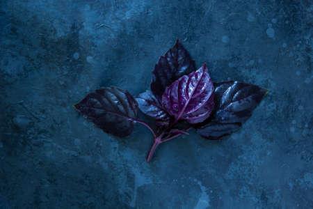 Fresh red basil herb leaves on black background. Purple Dark Opal Basil Archivio Fotografico