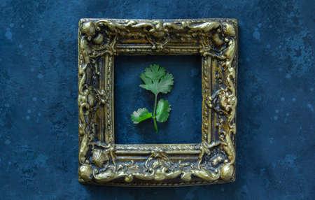 Fresh cilantro herb leaf in frame on black background.
