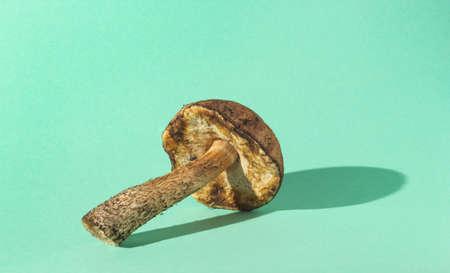 Forest mushroom on pastel mint background