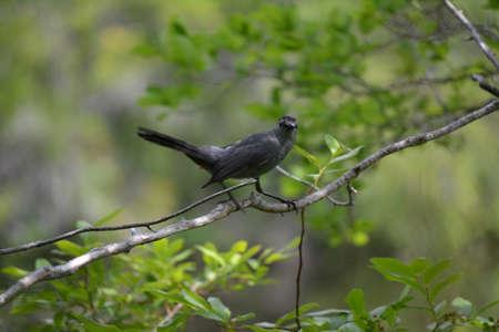 bird feet: A black bird on a branch