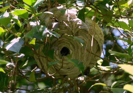 Een Bee Hive Stockfoto