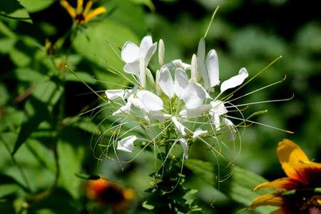 Unusual White Plant Stock fotó - 43209413
