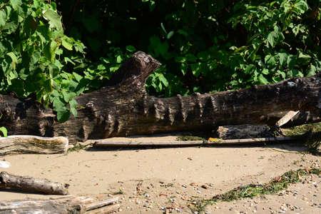 Driftwood on Shore Imagens