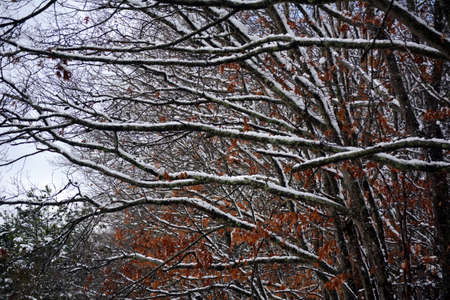 Branches weighed down by snow.