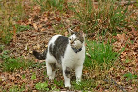Black and White Cat Stock fotó