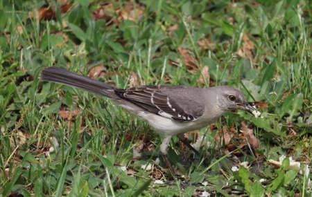 Gray Bird Stock fotó