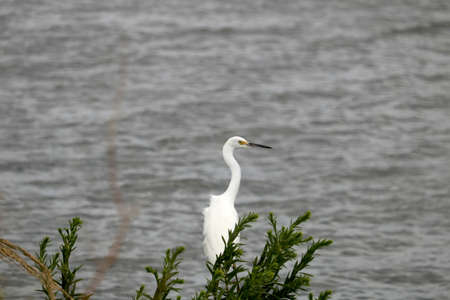 An egret by the water. Stock Photo