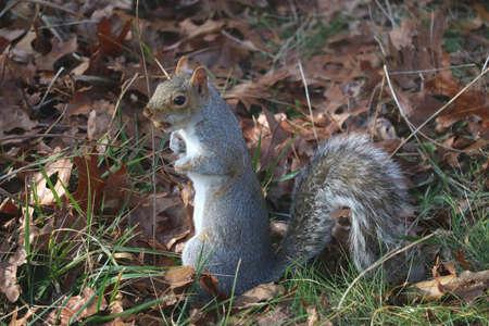 Squirrel Eatting Nuts