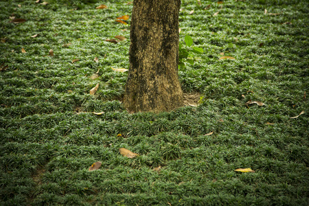 amongst: A lone trunk of a tree amongst grass
