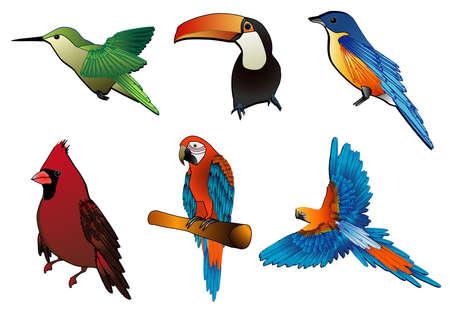 aves: vector birds- Ilustra��o