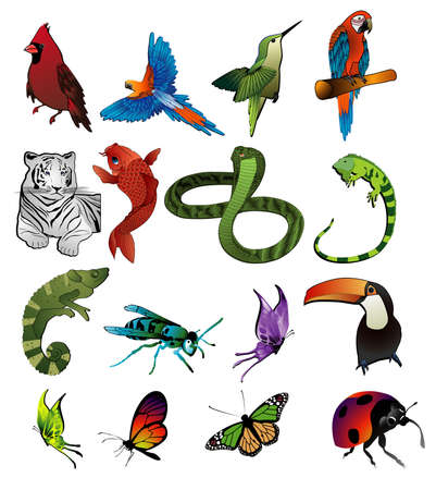 animals vector Vectores
