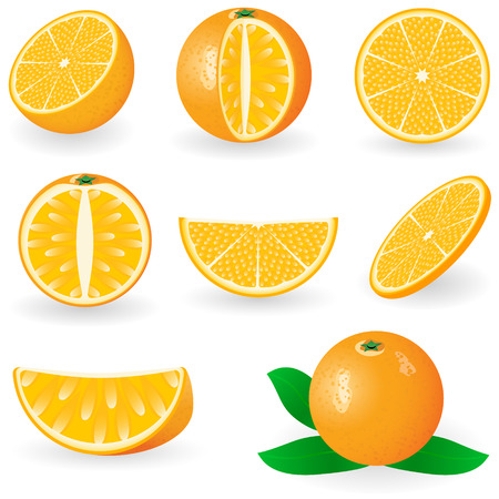 Vector illustration of orange fruit