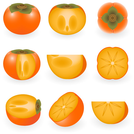 persimmon: Vector illustration of persimmon