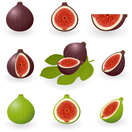 Vector illustration of figs