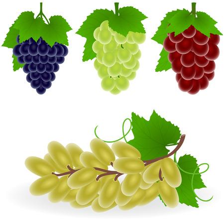 Vector illustration of grape Illustration
