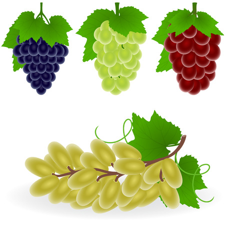 Vector illustration of grape Vectores
