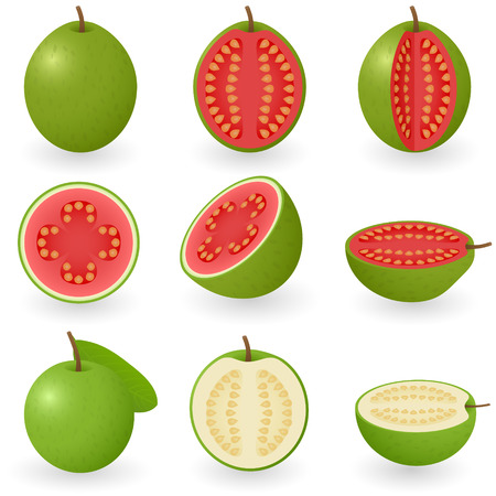 sliced fruit: Vector illustration of guava