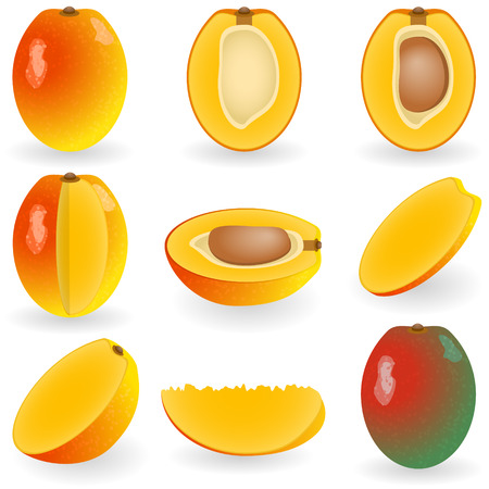 Ilustración vectorial de mango