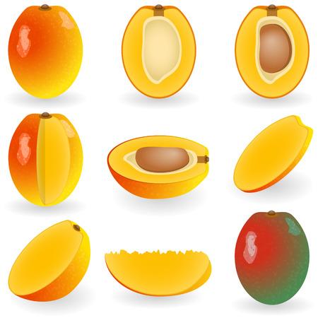 sliced: Ilustraci�n vectorial de mango