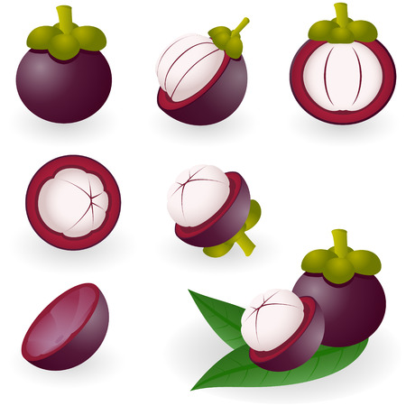Vector illustration of mangosteen