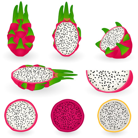 illustration of dragon fruit also known as pitaya, strawberry pear or cactus fruit