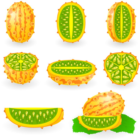 melon: illustration of kiwano also known as African horned melon or cucumber, hedged gourd, English tomato, melano