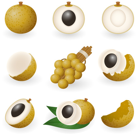 illustration of longan fruit or dragon eye