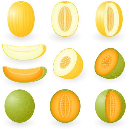 afbeelding van meloenen Stock Illustratie