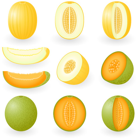 illustration of melons