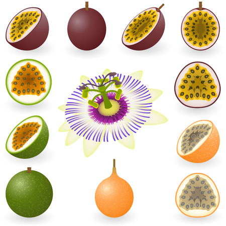 illustration of maracuja, granadilla and flower