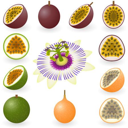 illustration of maracuja, granadilla and flower Stock Vector - 6294535