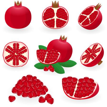 illustration of pomegranate Illustration