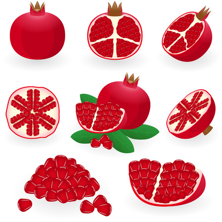 pomegranate: illustration of pomegranate Illustration