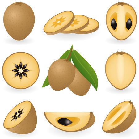 illustration of sapodilla or chiku Illustration