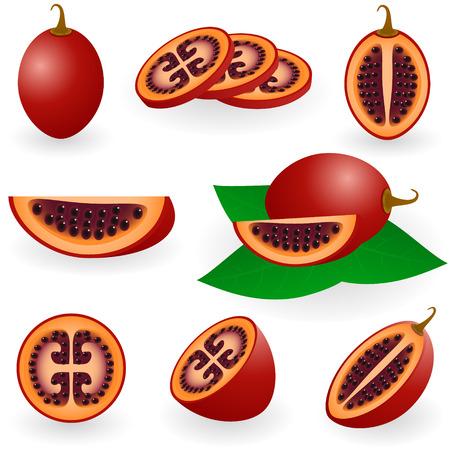 tomate de arbol: Ilustraci�n de tamarillo fruta o tomate de �rbol
