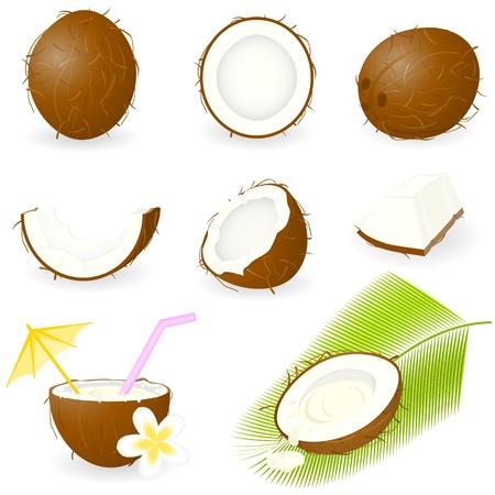 noix de coco: Ic�ne de noix de coco Set Illustration