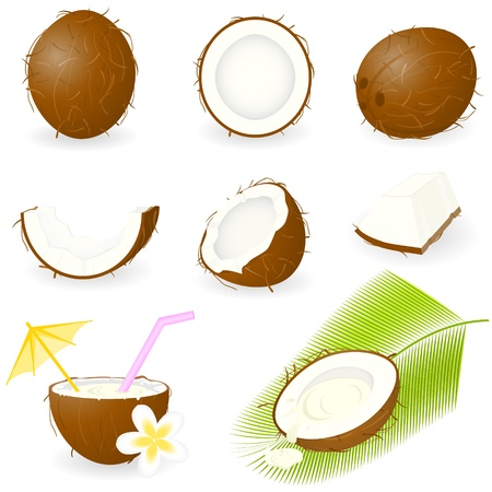 Icon Set Coconut Vector