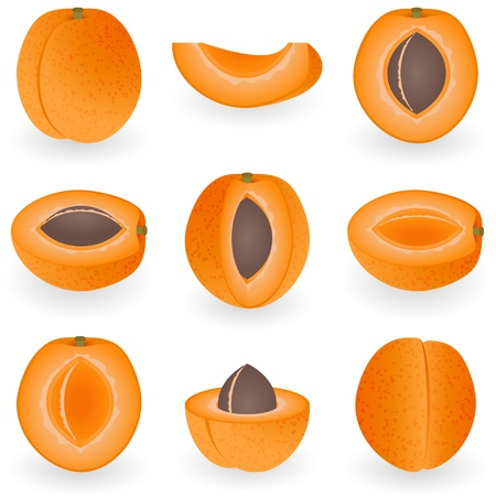 Icon Set Apricot Stock Vector - 21448847