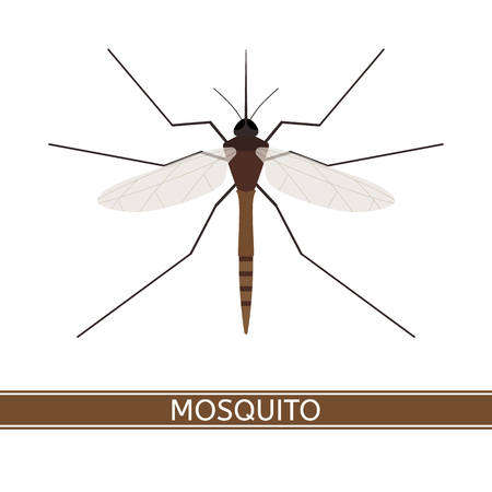 Vector illustration of mosquito, isolated on white background, in flat style.