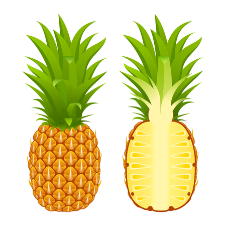 Vector illustration of pineapple whole and half isolated on white background. Tropical fruit. Vectores
