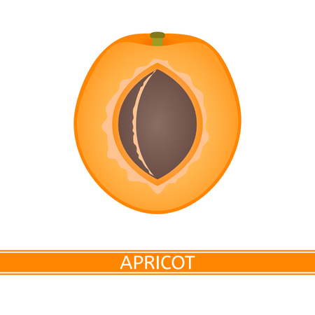 Apricot slices isolated on white background. Vector illustration. Imagens - 114801512