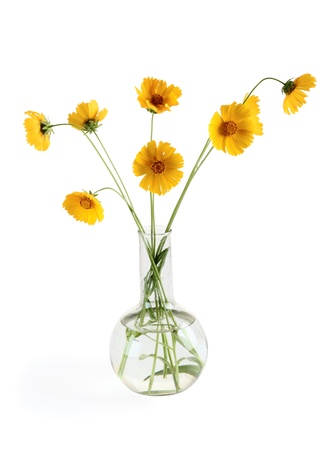 three yellow flowers in a vase over white photo