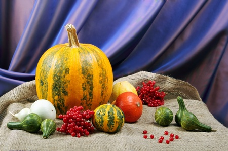 Still life of ornamental pumpkins and cones for Thanksgiving photo