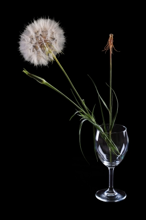 three flowers in a glass of dandelion on a black background
