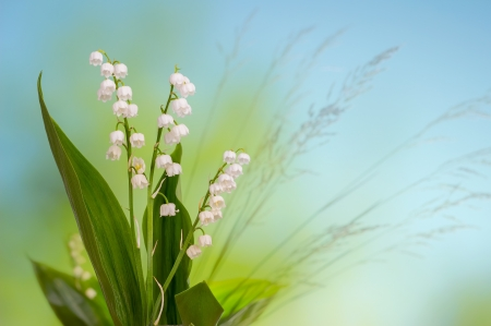 Lily of the valley on green and blue background