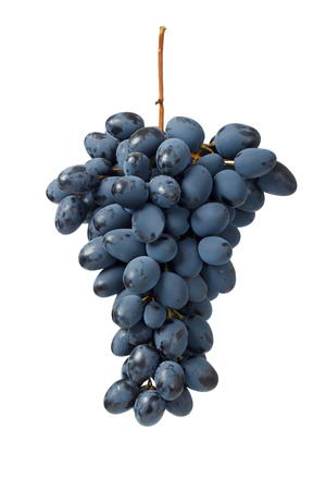 Fresh blue grape cluster isolated on white background